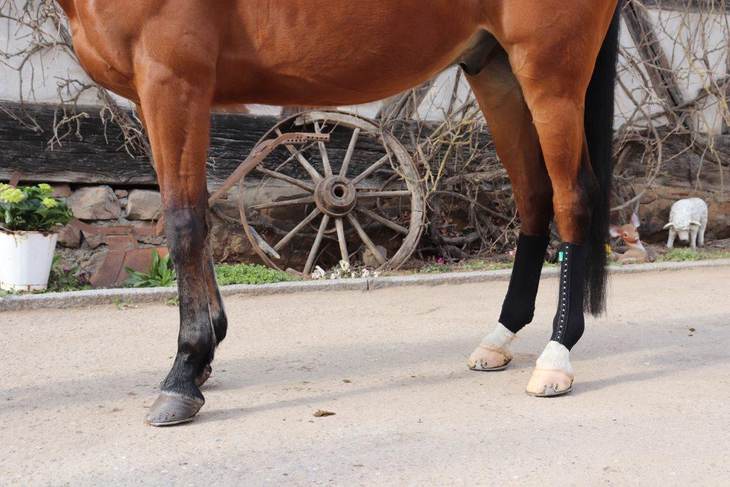 Angelaufene Beine Pferd Bandage Equicrown