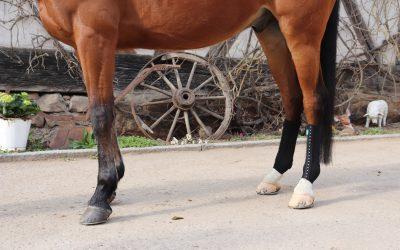 Was tun wenn das Pferd angelaufene Beine hat?