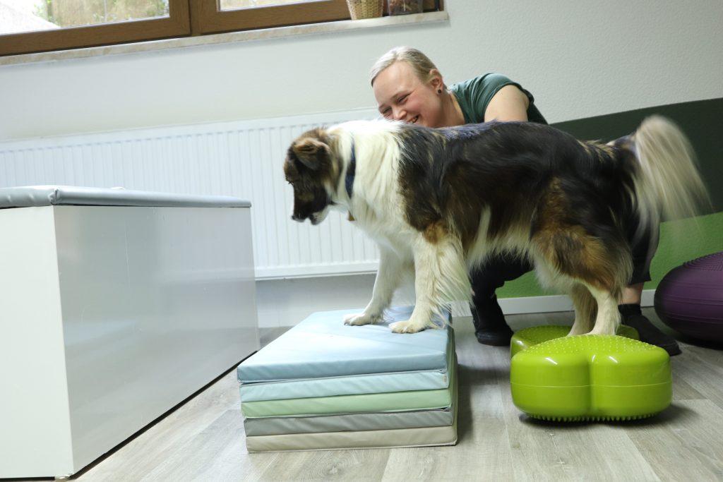Hund Physiotherapie FitBone