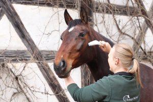 Pferd Behandlung Novafon Evelyn Nickel