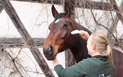 Massagegeräte für Pferde im Vergleich