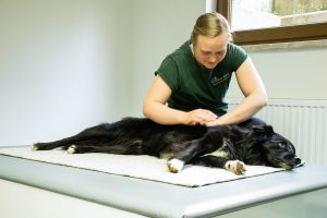 Hundephysiotherapie Theo Liege Evelyn Nickel Behandlung